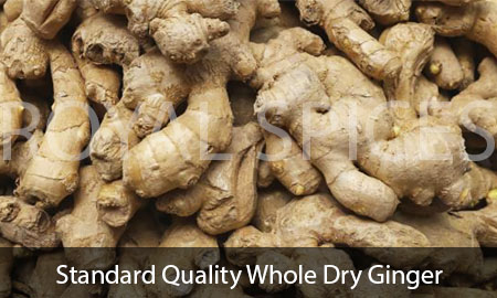 Standard Quality Whole Dry Ginger